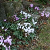 2. Skovbundsbed i haven