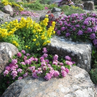 3. Vise en gruppe af alpine planter med fokus på farver eller løv