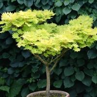 14. Dværg buske og stedsegrønne