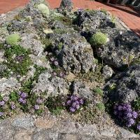 03. Vise en gruppe af alpine planter med fokus på farver eller løv